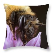 Bee's Eye Throw Pillow