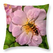 Beetle In A Rose 003 Throw Pillow
