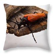 Beetle Pondering Throw Pillow