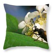 Beetle Preening Throw Pillow