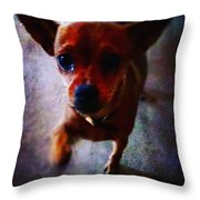 Begging Throw Pillow