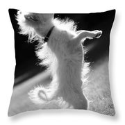 Begging Dog Black And White Throw Pillow