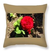 Begonia Flower - Red Throw Pillow