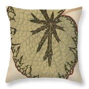 Begonia Marshallii  Throw Pillow