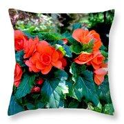 Begonia Plant Throw Pillow