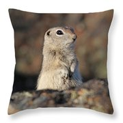 Belding Ground Squirrel Throw Pillow