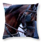 Belgian Beauty Throw Pillow