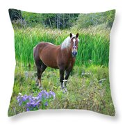 Belgian In Flowers Throw Pillow