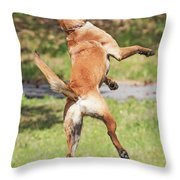 Belgian Shepherd Dog Throw Pillow