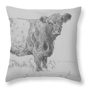 Belted Galloway Cow Pencil Drawing Throw Pillow