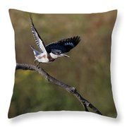 Belted Kingfisher Liftoff Throw Pillow