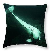Beluga Whale 3 Throw Pillow