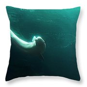 Beluga Whale 4 Throw Pillow