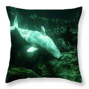 Beluga Whale 5 Throw Pillow