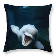 Beluga Whale Swimming With An Open Throw Pillow