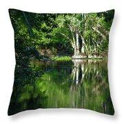 Bend Of The Ocklawaha River Throw Pillow