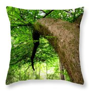 Bending Toward The Light Throw Pillow
