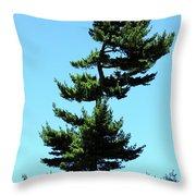 Beneath This Tree Lies Robert Edwin Peary Throw Pillow