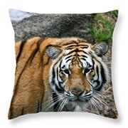 Bengal Eye To Eye Throw Pillow