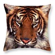 Bengal Tiger - 2 Throw Pillow