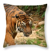 Bengal Tiger II Throw Pillow