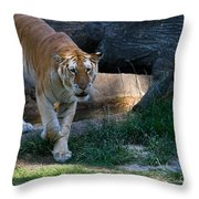 Bengal Tiger On The Prowl Throw Pillow