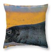 Benny At Sunset Throw Pillow