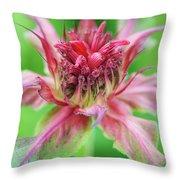 Bergamot Flower Throw Pillow