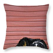 Bernese Mountain Dog Alertly Guarding Home. Throw Pillow