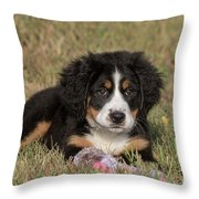 Bernese Mountain Dog Puppy Throw Pillow