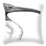 Berniers Ibis Throw Pillow