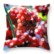 Berry Berry Red-1 Throw Pillow
