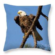 Berry Eagle Throw Pillow