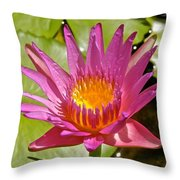 Beyond Beautiful Water Lily 3 Throw Pillow