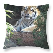 Beyond The Branches Throw Pillow