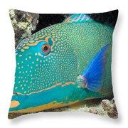 Bicolor Parrotfish Throw Pillow