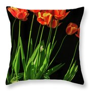 Bicolor Tulips Throw Pillow