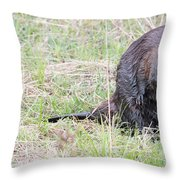 Big Beaver Throw Pillow