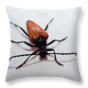 Big Beetle Throw Pillow