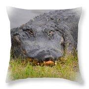 Big Boy Gator 2 Throw Pillow