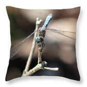 Big Bug Eyes Throw Pillow