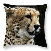 Big Cats 101 Throw Pillow