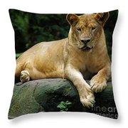 Big Cats 114 Throw Pillow