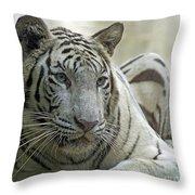 Big Cats 117 Throw Pillow