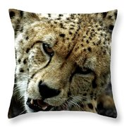 Big Cats 50 Throw Pillow