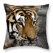Big Cats 78 Throw Pillow