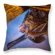 Big Eared Bat At Sunrise Throw Pillow