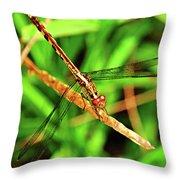 Big Eyed Dragonfly Throw Pillow