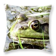 Big Eyed Frog In A Marsh Throw Pillow
