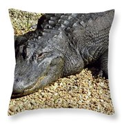 Big Gator Throw Pillow